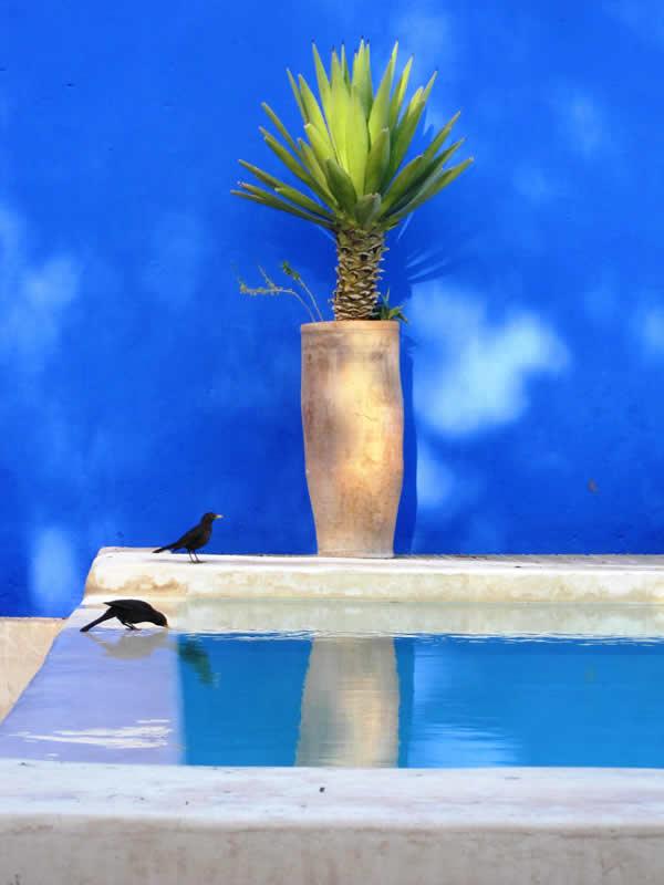 OKEthiq-oiseau-piscine